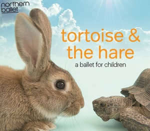 Tortoise thehare competitionimage