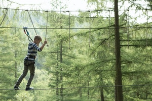 Tree top adventure  8    go ape