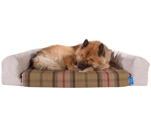 Dog bed competition