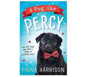 Pug like percy competitiom