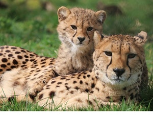Longleat family tickets competition