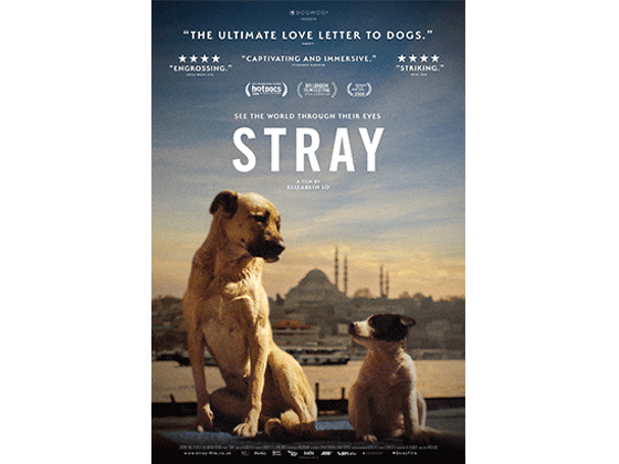 Win a bundle from the dogumentary STRAY sweepstakes