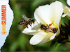 Bee Hotel & Flower Seeds for Bees by Plant Theatre sweepstakes