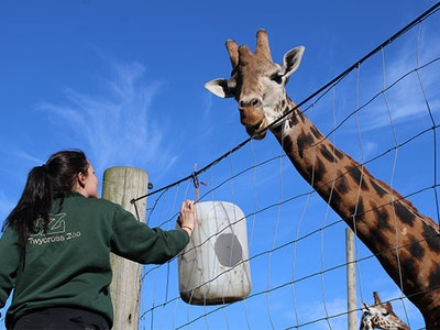 FAMILY DAY OUT TO TWYCROSS ZOO sweepstakes